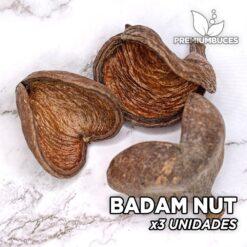 Badam Nut x3 Unidades Hojas y botánicos para acuario