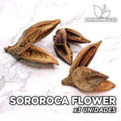 Sororoca Flower x3 Unidades Hojas y botánicos para acuario