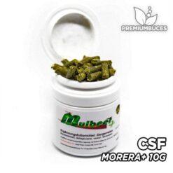 CSF Morera+
