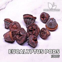 Eucalyptus Pods Hojas para Acuario